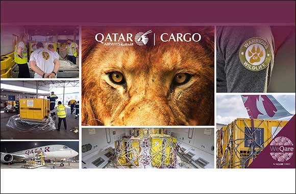 WeQare: Qatar Airways Cargo Returns Seven Rescued Lions To Their Natural Habitat For Free